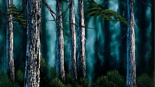 The Joy Of Painting - Series 2: 5. Secluded Forest