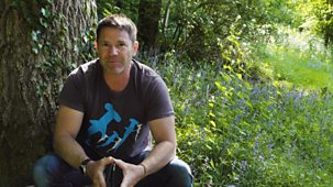 Diy Deadly With Steve Backshall - Series 1: 3. Deadly Woodlands