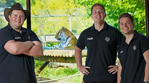 One Zoo Three - Series 1: 1. The Tigers