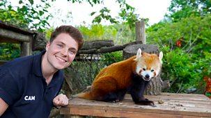 One Zoo Three - Series 1: 4. The Birthday