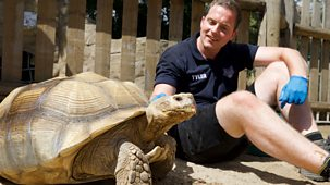 One Zoo Three - Series 1: 5. The Health Check