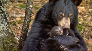 The Bear Family And Me - Spring