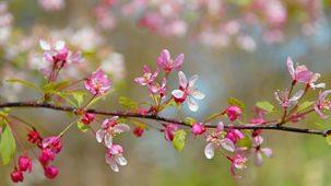 Garden In Snowdonia - Bodnant Blooming