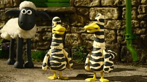Shaun The Sheep - Series 2 - Zebra Ducks Of The Serengeti
