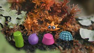 Tiny Wonders - Series 1: 2. Lichen