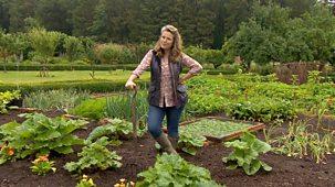 Bargain Hunt - Series 56: Kitchen And Garden Special