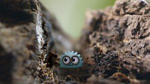 Tiny Wonders - Series 1: 7. Bark