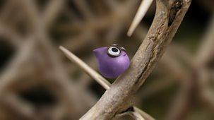 Tiny Wonders - Series 1: 9. Hedge