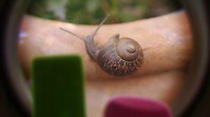 Tiny Wonders - Series 1: 10. Snail