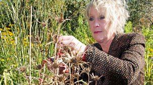 Life In A Cottage Garden With Carol Klein - Original Series: 6. Into Winter