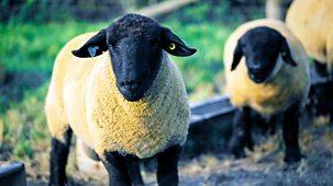The Farmers' Country Showdown - Series 5: 13. Melton Mowbray