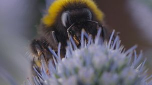 Ferne And Rory's Teeny Tiny Creatures - Series 1: 1. Bumblebees