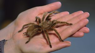 Ferne And Rory's Teeny Tiny Creatures - Series 1: 2. Spiders