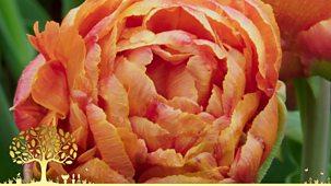 Gardeners' World - Winter Specials: Episode 3