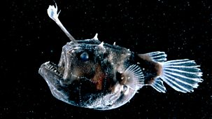 Nature's Microworlds - 11. The Deep Sea