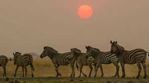 Our Wild Adventures - Series 1: 1. Africa