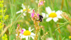 Countryfile - Plant Britain Spring Special