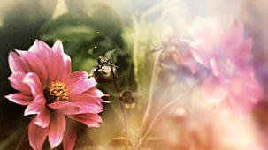 Hampton Court Palace Flower Show - 2021: Episode 2