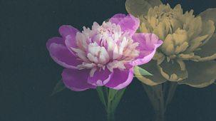 Hampton Court Palace Flower Show - 2021: Episode 3