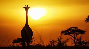Serengeti Ii - Series 1: 3. Renewal