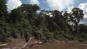 Threats to the rainforest from businesses and farming