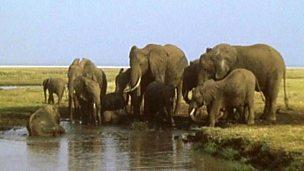 How do elephants use their trunks?