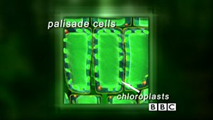 Cells, tissues and organs in plants