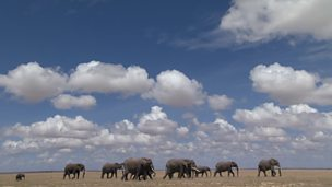 Elephants looking for water (no narration)