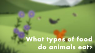 What types of food do animals eat?