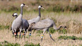 BBC - Tweet Top 10: Strangest Sounding Birds