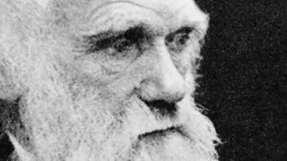 bbc iwonder charles darwin evolution and the story of our species