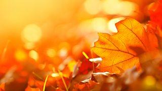 BBC Radio 4 - Four Seasons