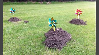 Trying to get rid of Moles in the garden with children's windmills