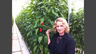 Anna Hill with the new smaller super sweet peppers