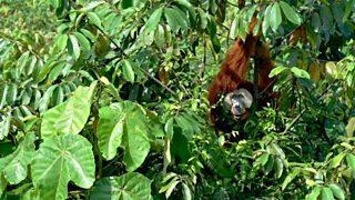 Spotlight on Sumatra