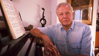 Sir David Attenborough in his trademark blue shirt sitting at a grand piano