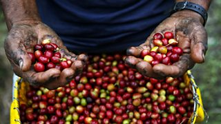 Coffee industry in Colombia