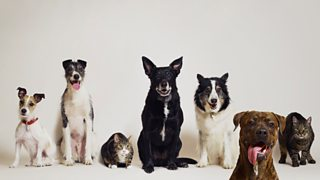 Five dogs and two cats of a variety of breeds