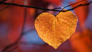 A heart-shaped golden leaf in autumn