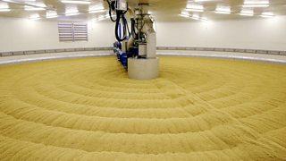 Large industrial vat of malting barley.