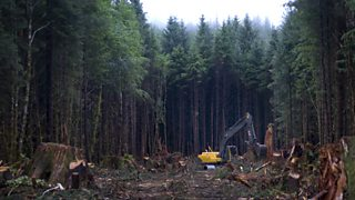 An area of a forest is cleared with heavy machinery.