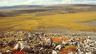 Arctic tundra in the Yukon Territory, Canada