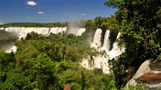 Igua in the Iguazu river on the border of Brazil and Argentina