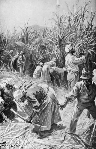 Caribbean cane cutters