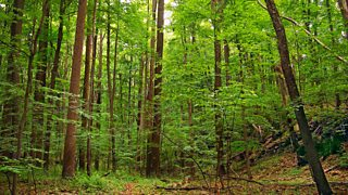 A deciduous forest in the USA