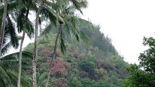 Rainforest in Hawai