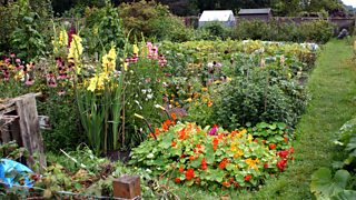 Allotments in Ripon, North Yorkshire