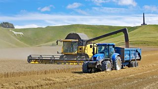 Wheat being harvested by a tractor