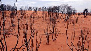 Bush scrub in Northern Territories, Australia