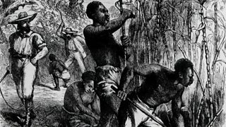 Slaves cutting and harvesting sugar cane on a plantation